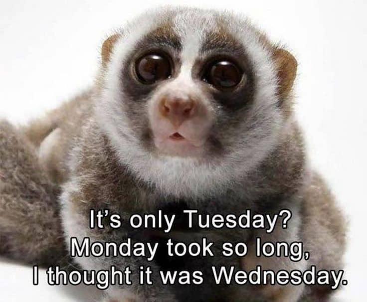 Tuesday Memes 9