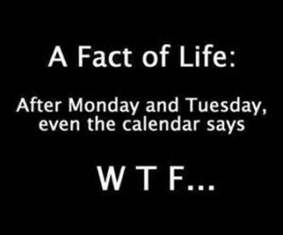 Wednesday Memes 9