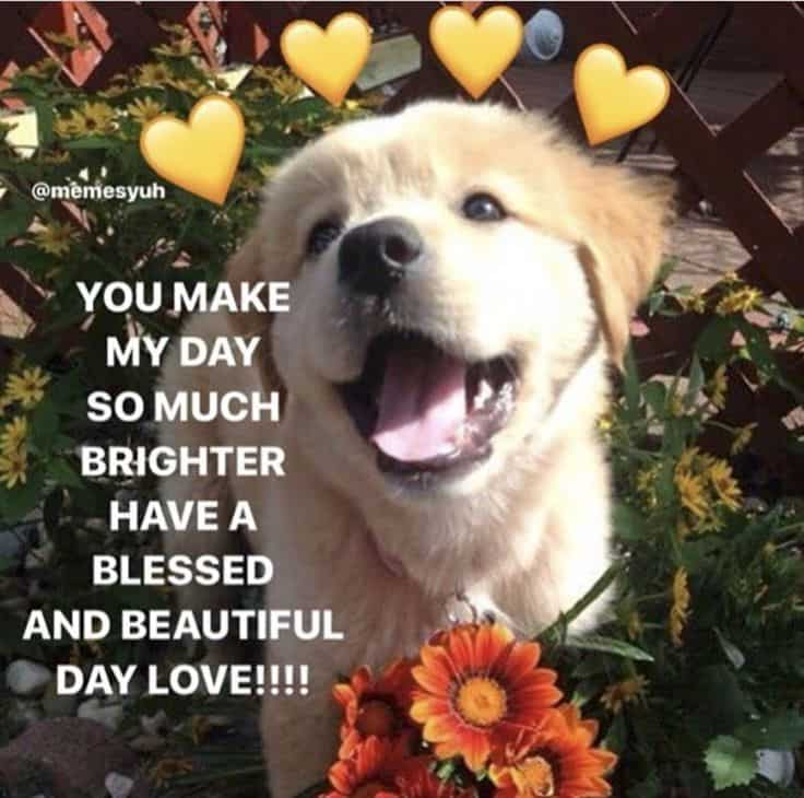 Wholesome heart memes 4